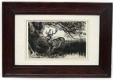 C.1900 etching. Stag at water's edge under a tree. In an old oak frame . Ap