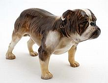 A Royal Doulton figure modelled as an English bull dog in brindle and white