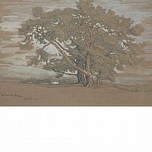 Samuel Colman American, 1832-1920 Pine Trees at El Monte, 1898