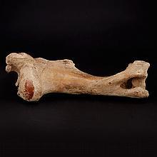 Fossil Buffalo Thigh Bone Kansas