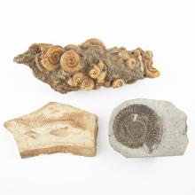 Group of Decorative Fossils