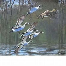 Peter Markham Scott British, 1909-1989 Group of Pintails, 1983