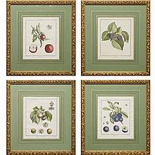 Various Artists [FRUIT STUDIES] Eight hand-colored engravings