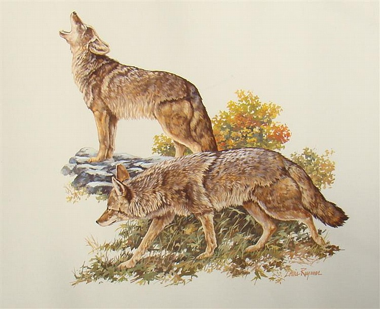 LOUIS RAYMER, American, 20th Century, Two wolves., Watercolor on paper, 14½