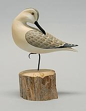 LIFE-SIZE SANDERLING By Harry V. Shourds III of Ocean View, New Jersey. In preening form. Mounted on a cedar base. Signed and dated...