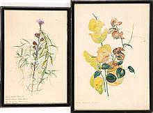 TWO FRAMED BOTANICAL WATERCOLORS: ARTISTS UNKNOWN. Both identified in Latin. 12.5
