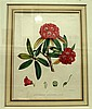 4 pieces. Botanicals - Hand-Colored Prints: Munting, Abraham.