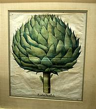 2 pieces. [Besler, Basilius.] Hand-Colored Botanical Engravings: