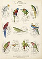 1 vol.  Jardine, William.  Leaves from the Book of Nature. Edinburgh: W.H. Lizars, [1846]. 1st Ed. Folio, later cloth; wo...