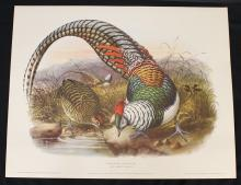 Rare Set of (6)Pheasant Lithogravures by Crocker & Gibson