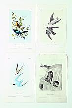 FOUR BIRDS OF AMERICA HANDCOLORED LITHOGRAPHS.