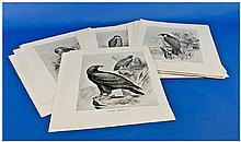 29 Monochrome Bird Prints After Drawings By