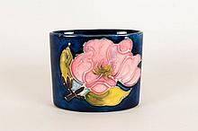 Moorcroft Small Trinket Pot ' Pink Magnolia ' Design on Blue Ground. c.1970