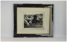 Framed Photograph Shepherd And Flock With Text ''My Soul Hath Them In Remem