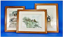 Massey Three Watercolour Drawings Of Birds In