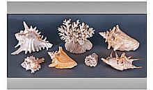 Collection Of Assorted Sea Shells. Various sizes