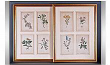 Sydenham Edwards Natural History Illustrator