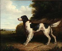 Artist Unknown (20th Century) An English Border Collie, Oil on canvas,
