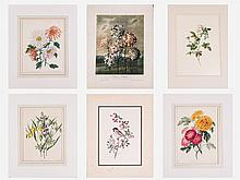 A Miscellaneous Collection of Botanical Colored Lithographs, Engravings and Etchings by Various Artists, 20th Century,