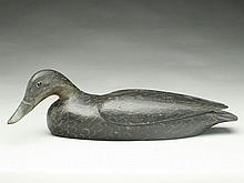 Swimming black duck, Gerald Robinson, Blue Hill, Maine, early 2nd quarter 20th century.