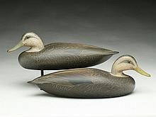 Extremely rare pair of hollow carved presentation grade black ducks, Shang Wheeler, Stratford, Connecticut.
