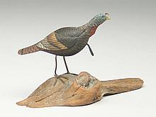 Miniature turkey, George Reinbold.
