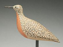 Exceptional robin snipe in spring plumage, Daniel Lake Leeds, Pleasantville, New Jersey, circa 1900.