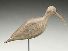 Large curlew from the Eastern Shore of Virginia.