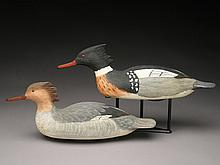 Pair of mergansers with lead weights, Cigar Daisey, Chincoteague, Virginia.