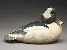 Bufflehead drake, Ward Brothers, Crisfield, Maryland.