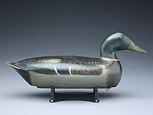 Mallard drake, Bert Graves, Peoria, Illinois, 1st quarter 20th century.