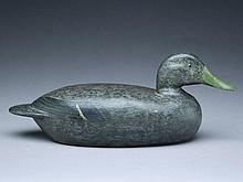 Black duck, Ed Keller, Bartonville, Illinois.