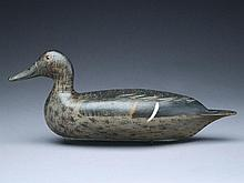Pintail hen, Bert Graves, Peoria, Illinois, 1st quarter 20th century.