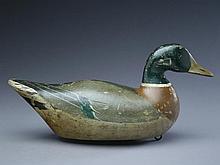 Mallard drake, Charles Bergman, Astoria, Oregon.