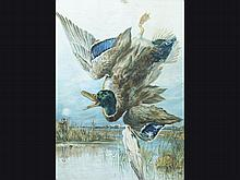 Dead Shot mallard poster with falling duck.