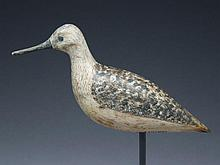 Yellowlegs, Harry V. Shourds, Tuckerton, New Jersey, circa 1900.