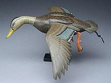 Flying 2/3 size black duck, Ken Massey, Stevensville, Maryland.