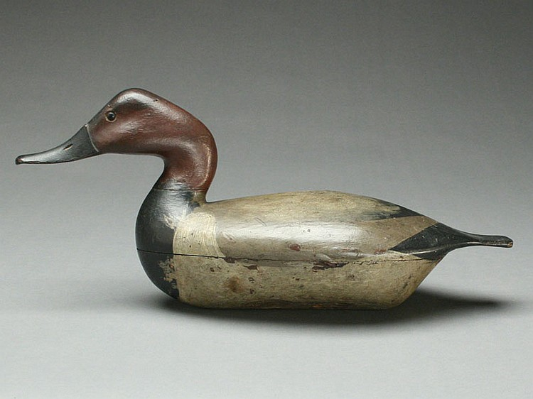 Very rare canvasback drake, Charles Ruggles, Henry, Illinois, circa 1880's.