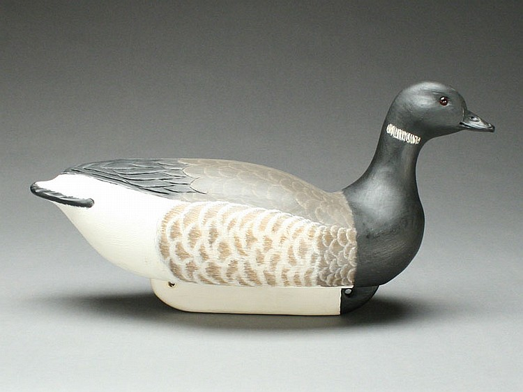 Rare brant with slightly turned head, Cigar Daisey, Chincoteague, Virginia.