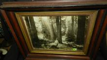 Vintage framed black and white photo, old growth trees by Kinsey