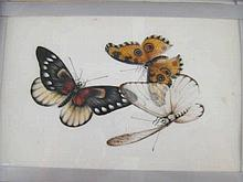 Twelve very fine Chinese watercolour paintings on rice paper of butterflies