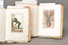 2 volumes Buffon Natural History 18th C.