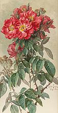 PAUL DE LONGPRÉ (French/American, 1855-1911) Branches o