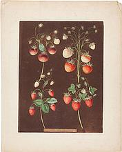 George Brookshaw (1751-1823). Three Prints: Strawberrie
