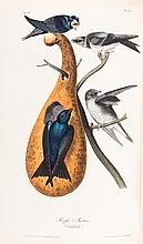 John James Audubon. The Birds of America, from Drawings