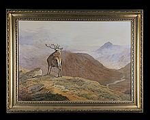 NICOLAS PEGLITSIS AN ORIGINAL FRAMED ACRYLIC STUDY OF A STAG IN THE HIGHLANDS,