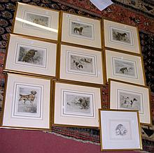 Collection of ten assorted coloured hunting dog prints AFTER STOKES