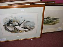 Five old bird engravings, including Puffin