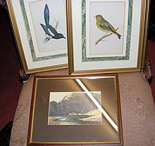 Set of antique bird engravings, together with one other picture
