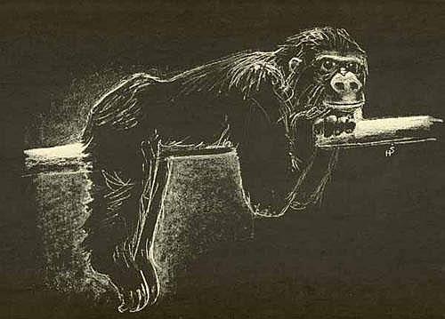 Strub,H.: Tiere im zoologischen Garten Basel.